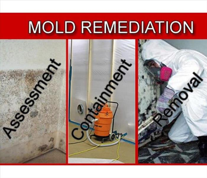 How to handle Mold safely.